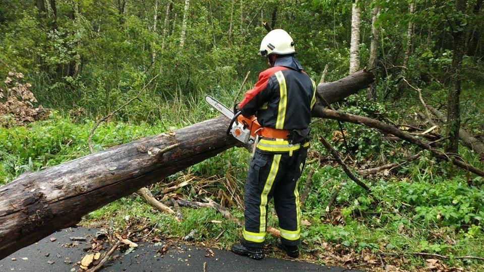 На Рівненщині повалені дерева заблокували дорогу та пошкодили авто