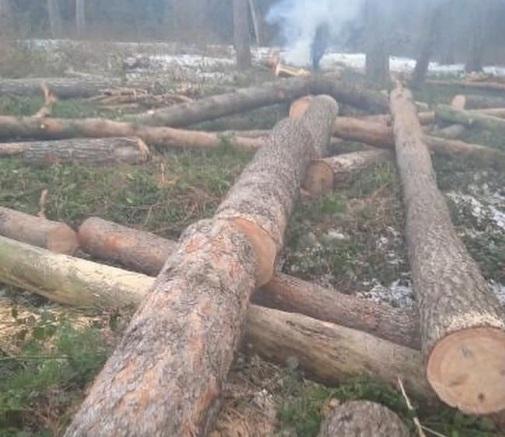 На Рівненщині на місці, де часто відпочивають люди, – вирізають ліс (ФОТО)