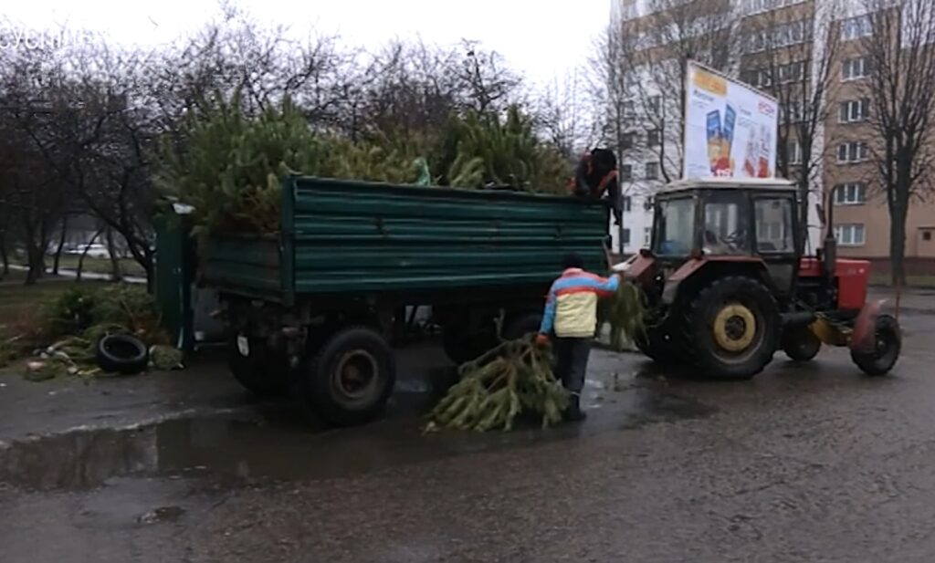 У Рівному новорічні дерева перероблюють на тріски