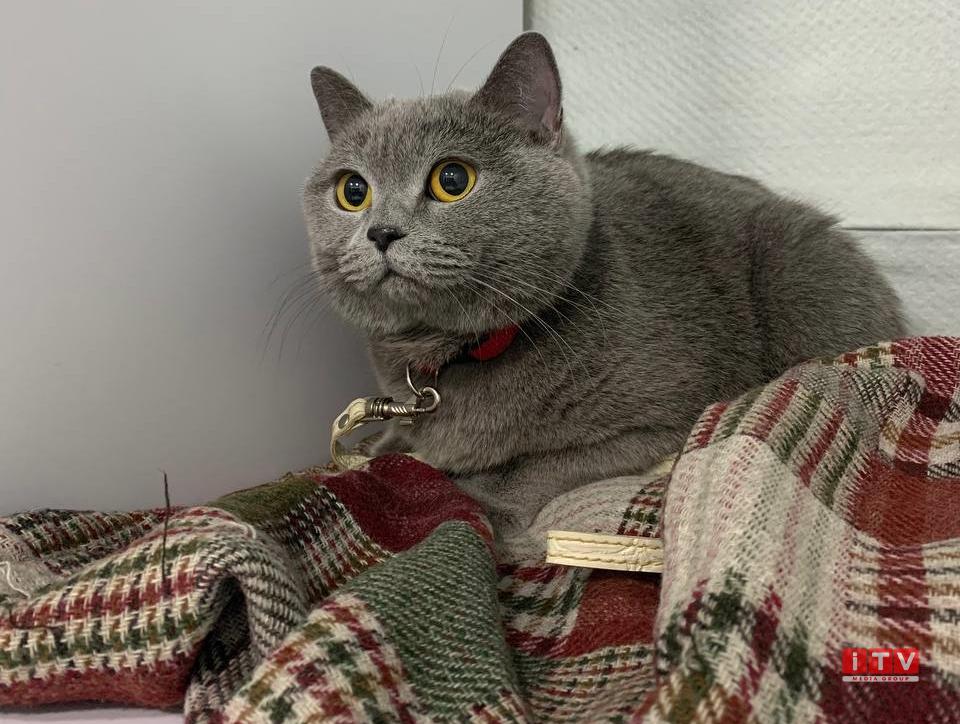 День котів: історія свята та цікаві факти про пухнастиків (ФОТО)
