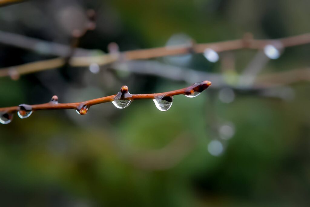 Весна на Рівненщині: у Сарнах повітря прогрілося до +13