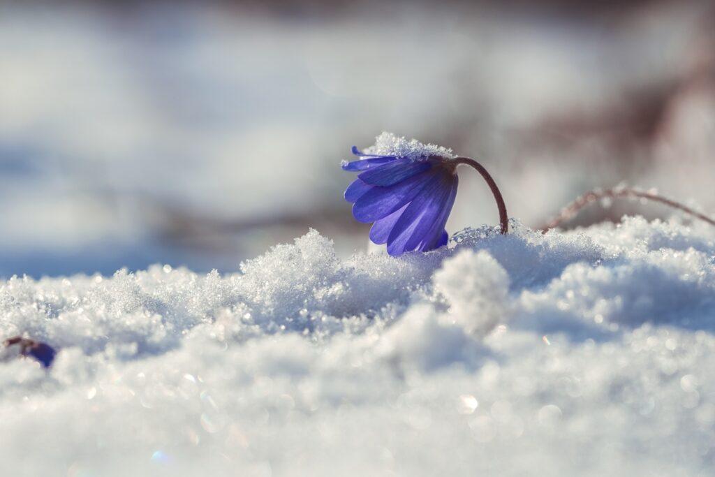 На Рівненщині прогнозують морози та сніг