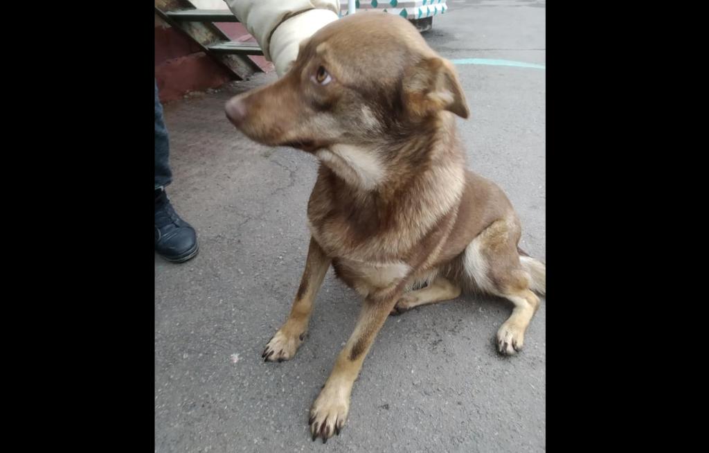 У Рівному закликають врятувати від отруєння собаку Рижульку