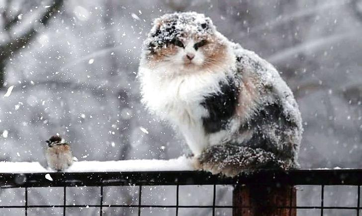 У понеділок на Рівненщині сніжитиме