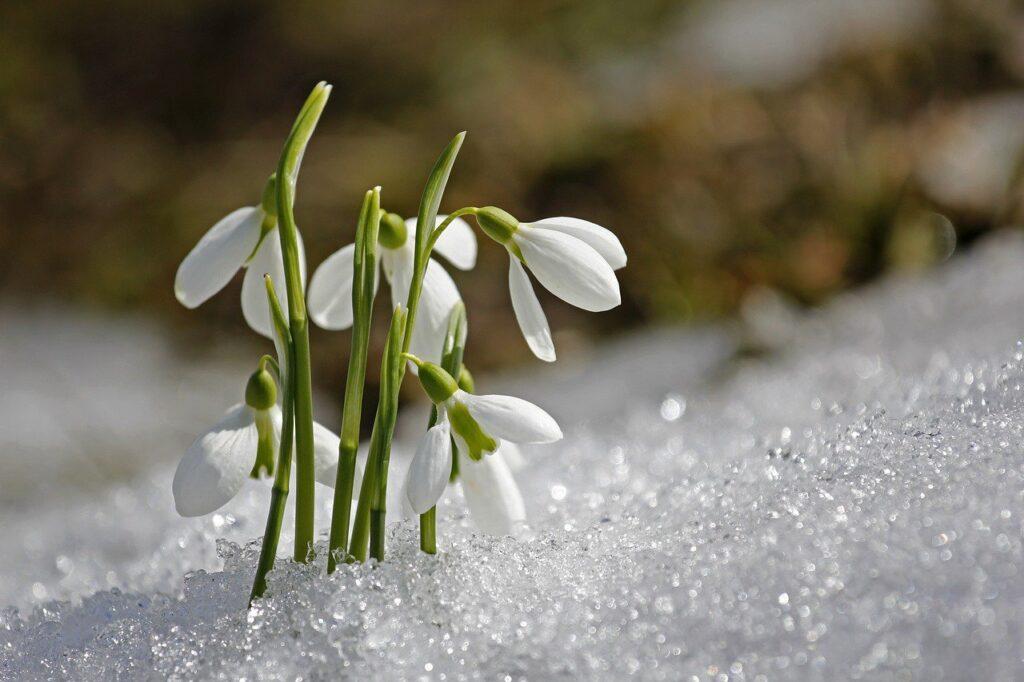 Якою погодою зустріне рівнян неділя, 21 березня