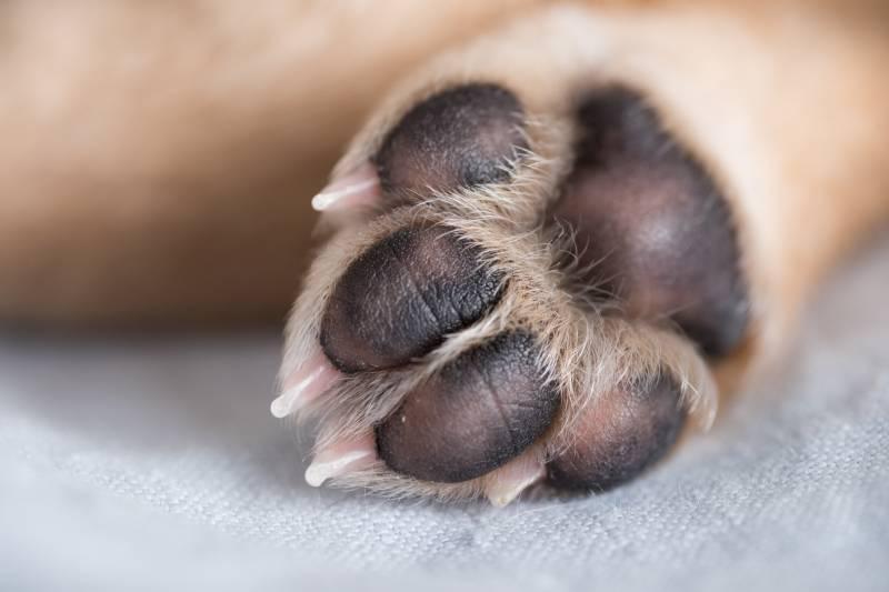 У Рівному небайдужі рятують отруєну собаку