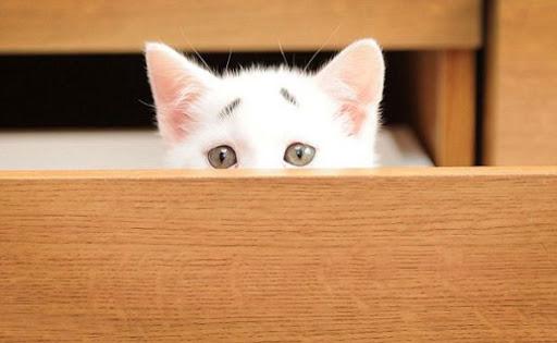 Рівнянам заборонять тримати у квартирі більше одного кота чи собаки?