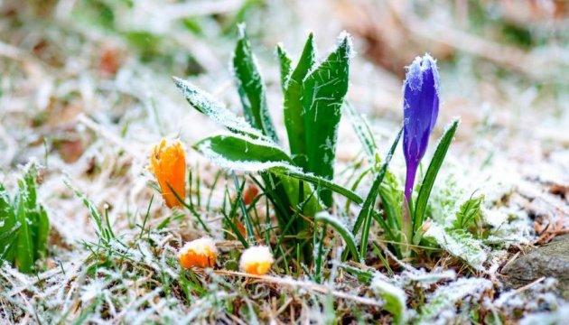 Помаранчевий рівень небезпеки: на Рівненщині прогнозують заморозки
