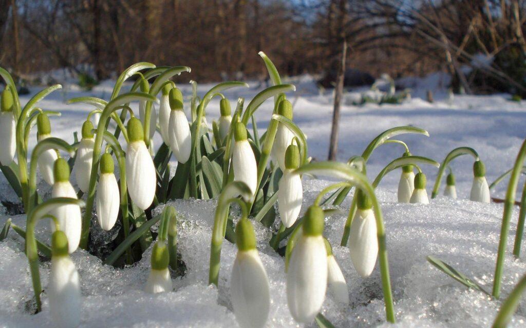 Синоптики прогнозують мокрий сніг на Рівненщині