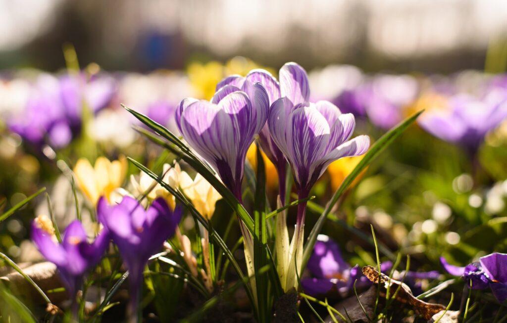 Яку погоду прогнозуть на Рівненщині 12 квітня