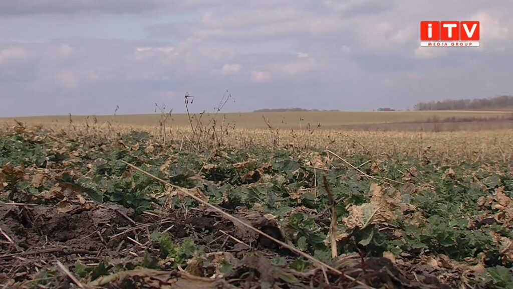 Погодні гойдалки на Рівненщині: коли прийде весна (ВІДЕО)