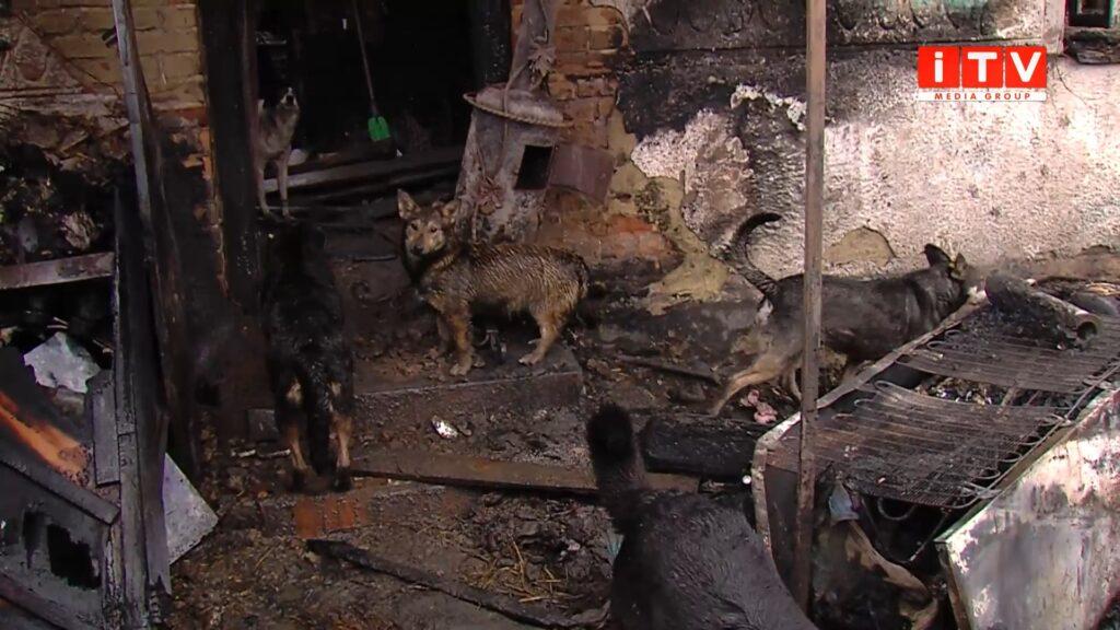 Пожежа у Здовбиці: десятки собак шукають прихистку (ВІДЕО)