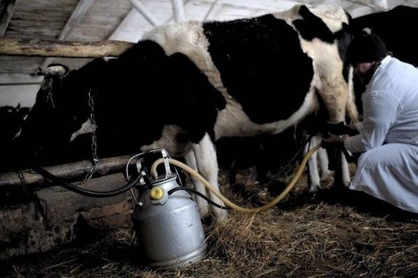 Тваринникам Рівненщини продовжують відшкодовувати кошти за доїльні апарати