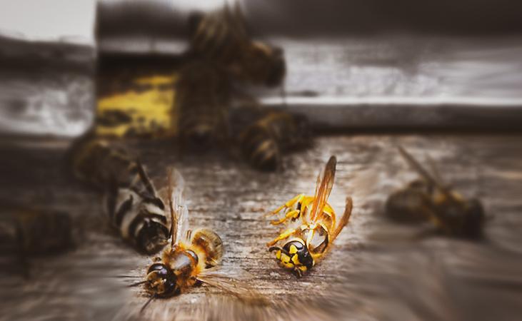 На пасіках Рівненщини гинуть комахи