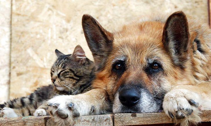 У Здолбунові на безпритульних тварин виділили 60 тисяч гривень з бюджету