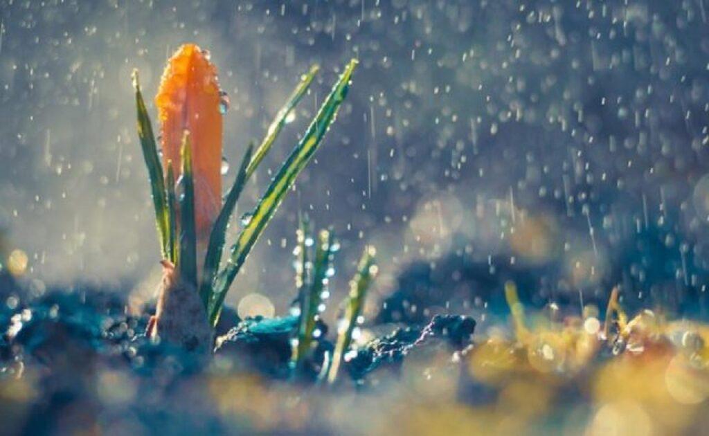 У Рівному прогнозують слабкий дощ