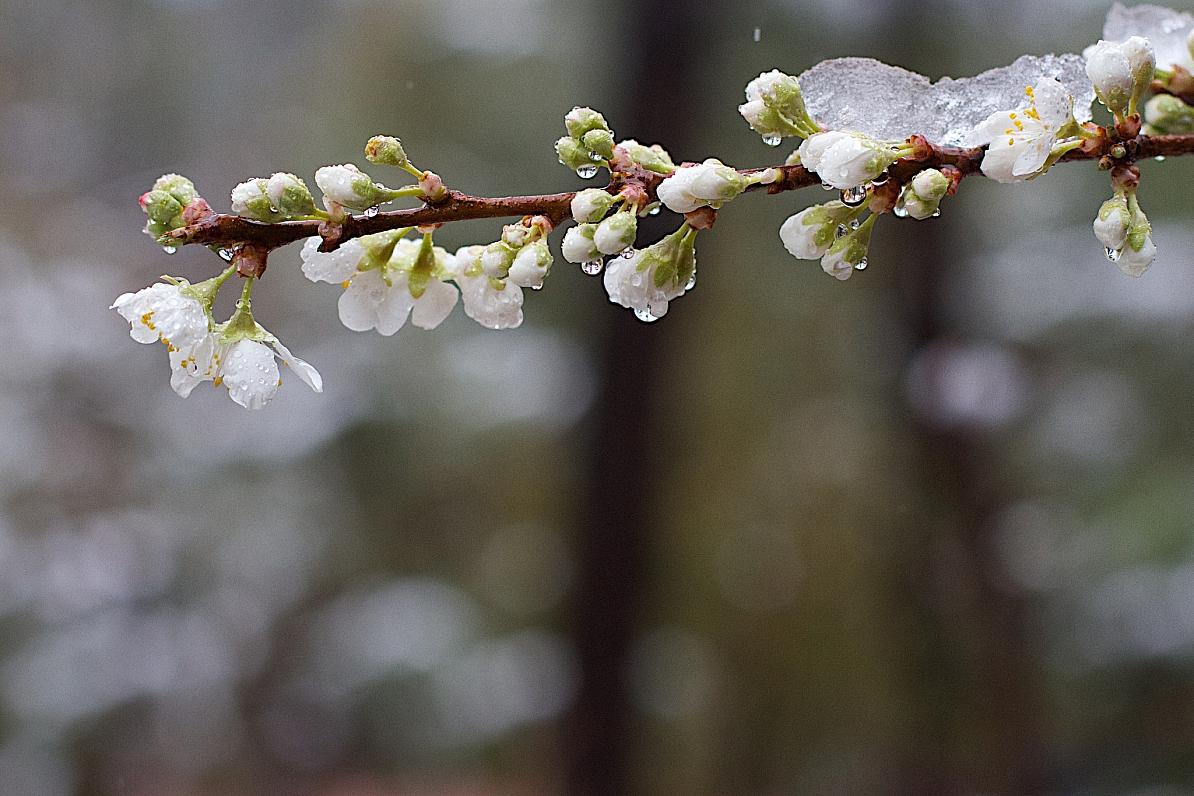 На Рівненщині прогнозують заморозки