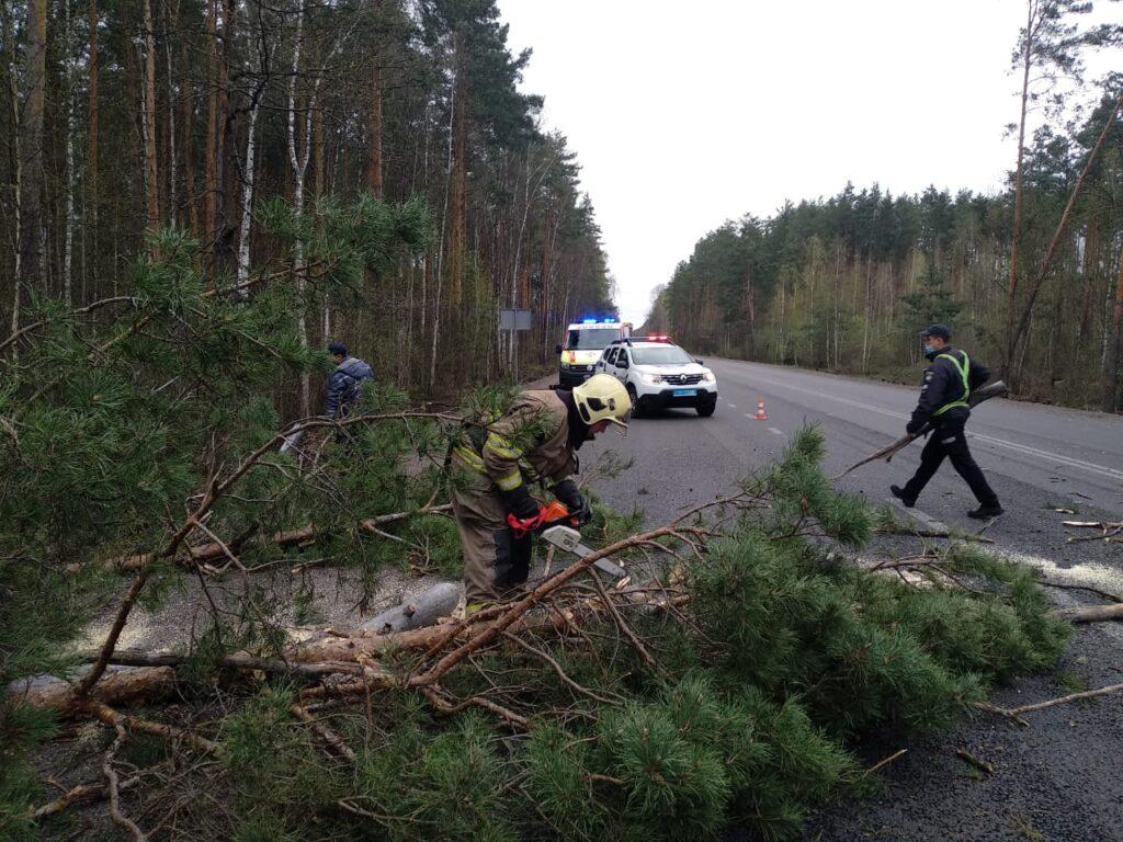 На Сарненщині повалене дерево заблокувало дорогу