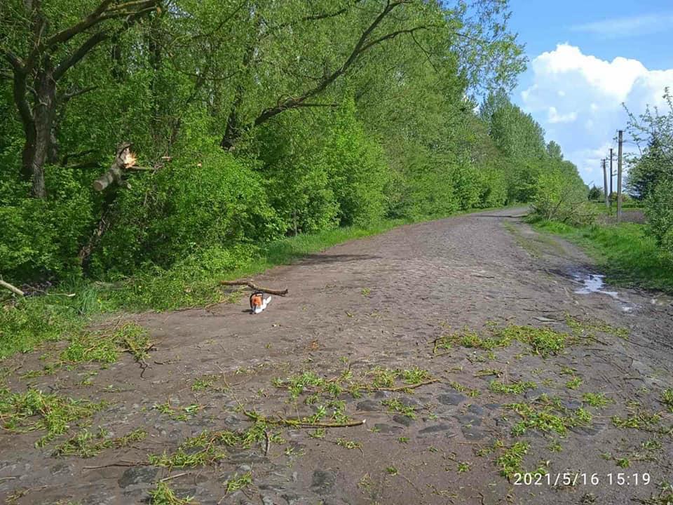 На Рівненщині через негоду дерево звалилось на дорогу