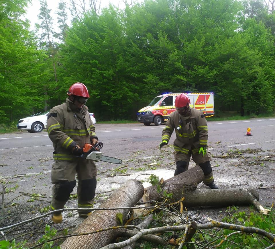 На Рівненщині повалене дерево заблокувало автотрасу