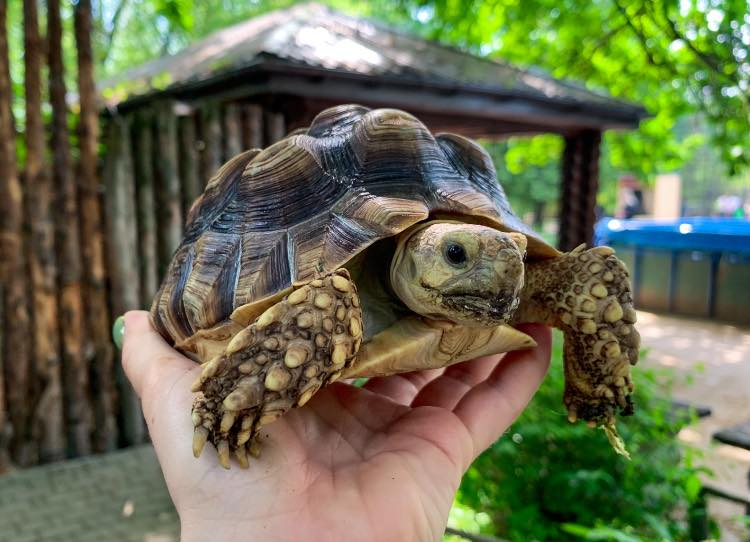 Рівненський зоопарк запрошує на день черепах